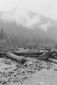 The HoH Rainforest – Power of Water.