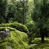 Moss garden – Kyoto