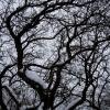 Huangshan – Trees in winter.