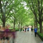 approach_ tree lane