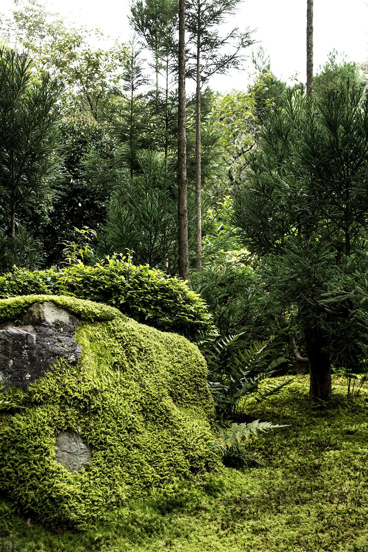 Nature martijn de geus - Moosgarten kyoto ...